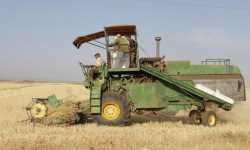 القمح يهرب من سورية