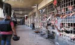 تقرير: مقتل 10 أشخاص في سجون النظام بسبب التعذيب خلال نيسان الماضي