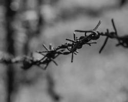 تقرير يوثق ضحايا التعذيب في سجون النظام خلال شهر أيلول